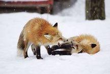 FOX THIS!