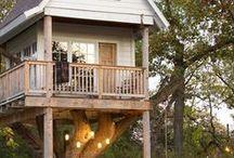Tree hut #