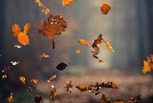 Autumn / by Thymes Fragrances