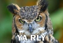 Owl really?