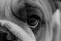 Bulldawg Heartbreakers / Beloved Coach, we know you're waiting on the other side of Rainbow Bridge.   / by ** FuNkyTX'n**