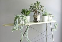 Decorate: Gardeny...Everything / by Becca Berger   from Gardners 2 Bergers
