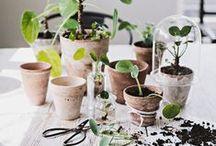 växter.