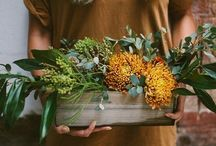 Plants / by Ashleigh Lay