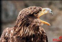 Safari Photo en Alsace / Cours photo en Alsace à la Volerie des Aigles et à la Montagne des Singes avec un photographe professionnel, parfait pour se familiariser avec la photographie animalière!