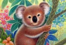Koala Love / All things koala bears!