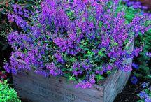 gardening / by Dana Riddle