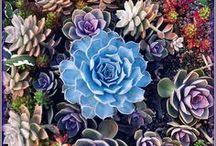 Lovely flowers & Gardens