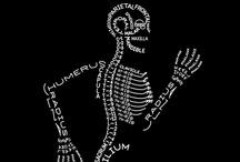 Skulls and Skeletons...Oh My! / Skeletal artwork.