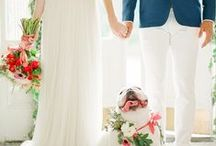 Wedding Pets / Wedding Pets Inspired By- Dog Love, How to Incorporate Pets Into The Wedding, Horses, Puppies, Cats & More!