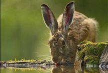Animals 2 / animals  / by Teresa Mitchell