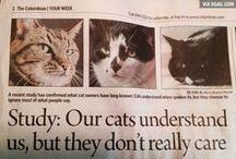 いろんないろんなネコちゃん