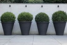 potted trees & boxwoods