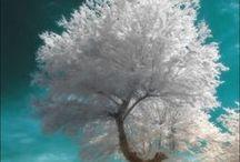Forest, Trees, Gardens / by Maggie Weakley
