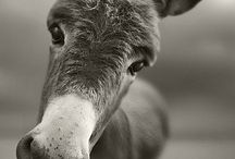 ANIMALS / A gift from God / by Ale Brugal
