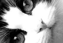 cat. / by christy.