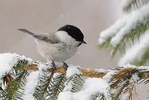SNOW WHAT! / by *★ Sandra 'Sandi' Rosenberger ★*