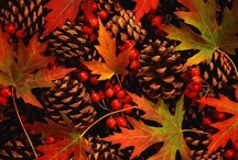 It's Fall, Y'all! / by *★ Sandra 'Sandi' Rosenberger ★*