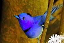 For the Birds / by *★ Sandra 'Sandi' Rosenberger ★*