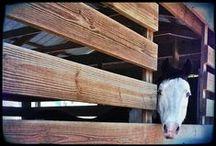 P52 SweetShot Luna / A Year of Pictures of my Paint Horse Luna. Maggie Weakley. MaggiesAngels.com. http://kentweakley.com/blog/category/project52/