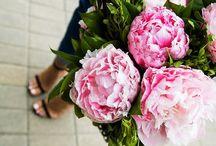 Festas - Flores