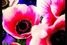 Flower power / by Les Levine