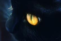 Les Chats..orgueil de la maison