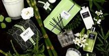 Bamboo Home Fragrance Collection / Flowering bamboo is mingled with a variety of white florals, sparkling citrus and fresh green accords.