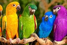 Birds of a Feather /   / by Susan Torregrossa