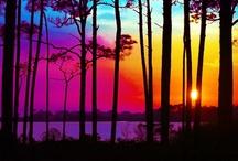 Sunrise, Sunset / by Susan Torregrossa