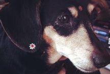 dachshunds - eu amo / by Eliani Mischiatti