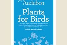 Plants for Birds