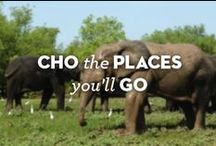 CHO the Places We'll Go! / Our CHOmobile travels & beyond.