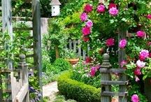 Gardening Girl / by Stephanie Hooper
