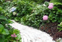 Southern California Gardening / Southern California gardening and landscape ideas. Tips, tricks and inspiration for home gardening, backyard landscape.  / by Wendy Nielsen