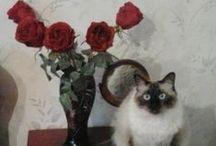 Kittens& pets / Frumusele