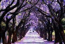 Trees / by Anne N.