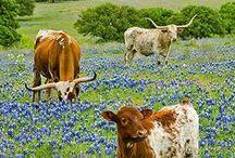 Texas / by Anne N.