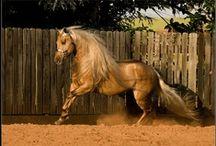 Horse's / moms passion