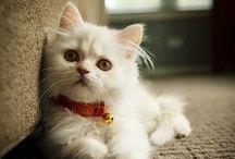 Cute animals :)