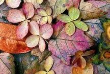 Herbst : *Goldene Jahreszeit* / Der Herbst, die goldene Jahreszeit lockt nach draussen mit seinen bunten Blättern und den letzten Sonnenstrahlen, aber auch die GEmütlichkeit zu Hause rückt immer mehr in den Fokus.
