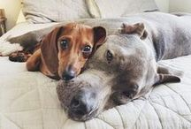 Dogs / Pretty much just lots of photos of incredibly cute and beautiful dogs