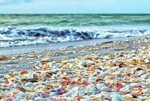 Salt & Shells / The cure for anything is saltwater: sweat, tears, or the sea.