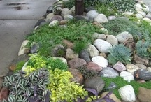 Green Thumb Ideas / by Lorrie Pope