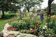 Gardening Ideas / by Crysta Alger