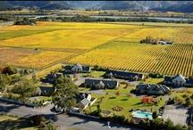 O u r  P l a c e / Pictures from in and around Vintners Retreat, Marlborough, NZ #vintnersretreat #marlborough #newzealand #onlymarlborough