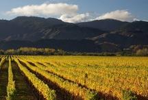 M a r l b o r o u g h / Our wonderful region. Top of the South Island, New Zealand. Wine, cuisine, Marlborough Sounds, beautiful vistas, we love it here! #onlymarlborough #brillianteveryday