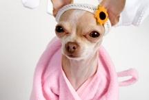 Design / by Pooches On Pakington - Designer Pet Accessories
