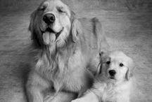 Furry Babies / Puppies!! / by Debbie Landeros