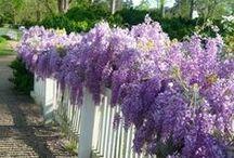 Garden Ideas / by FairyLynne